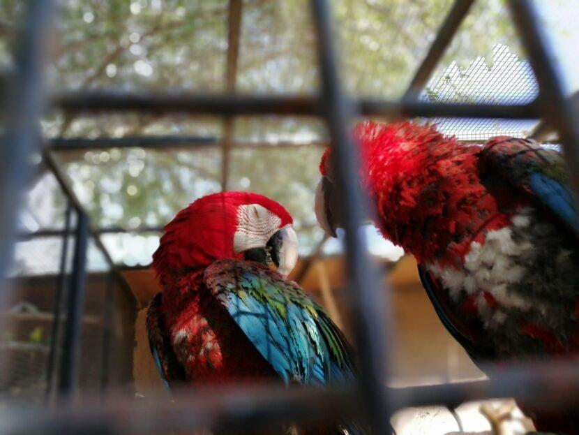 Попугаи Emirates park zoo