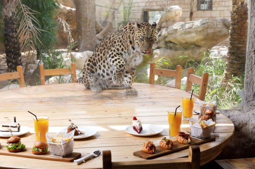 Завтрак с большой кошкой в Emirates park zoo
