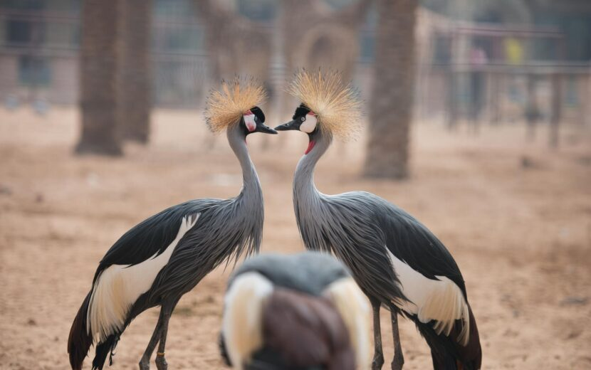 Птицы в Emirates park zoo