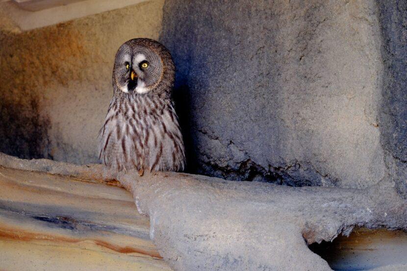 Сова в Emirates park zoo