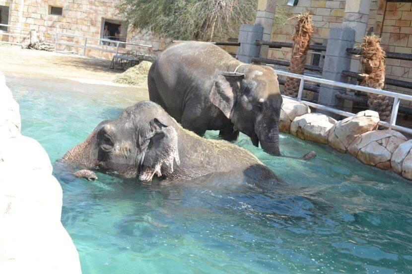 Слоны в Emirates park zoo