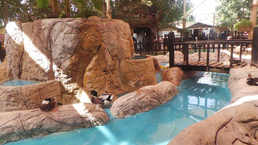 Emirates park zoo, птицы