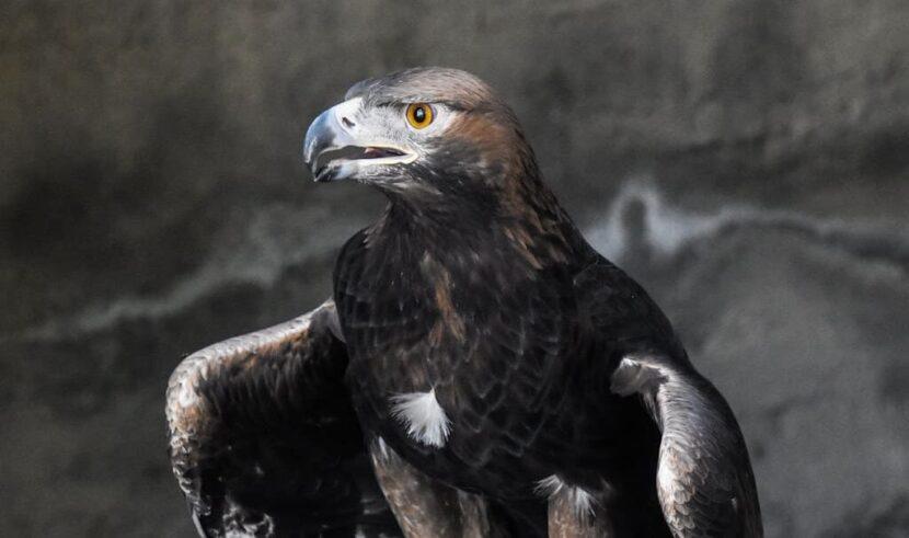 Птица в Emirates park zoo