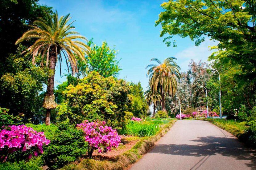 Планируем посещение Батумского ботанического сада