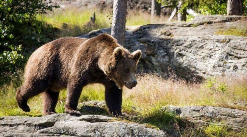 Байкальский Природный Заповедник
