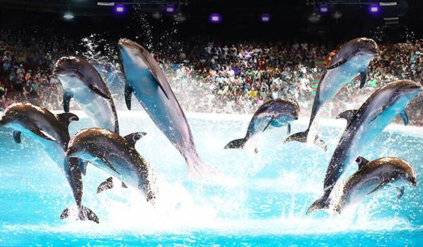 Дубайский дельфинарий