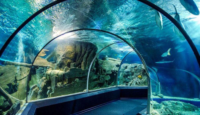 """Океанариум """"Тайны океана"""""""